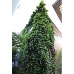 外壁緑化<br>